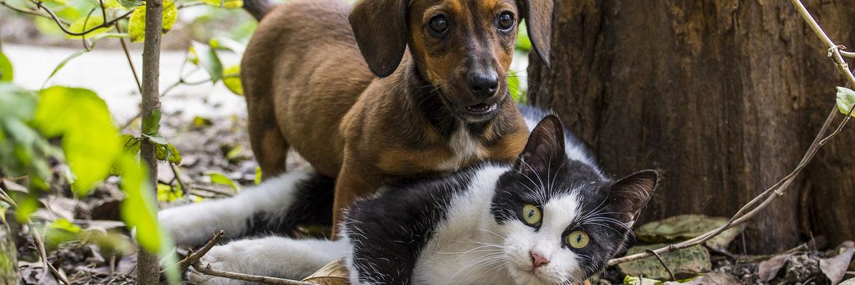 Info & Service Tierarztpraxis Trohorsch