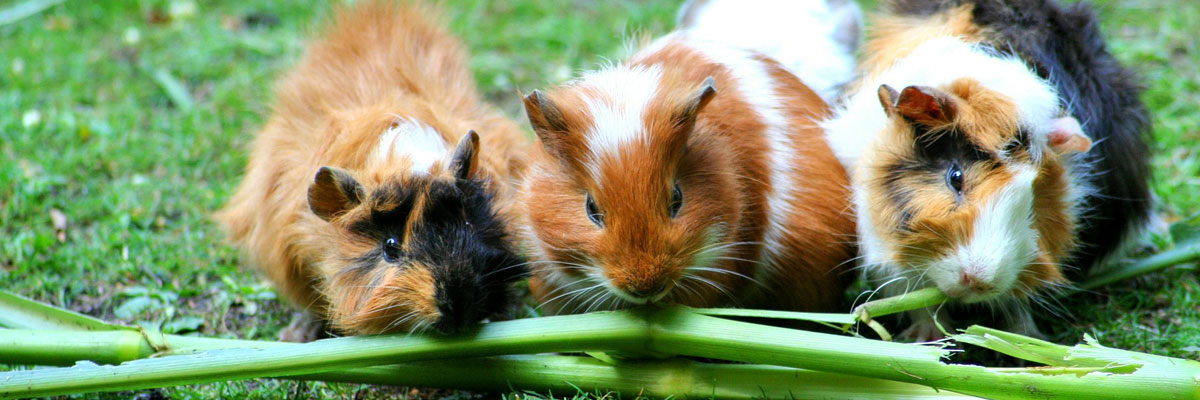 Kontakt Tierarztpraxis Trohorsch