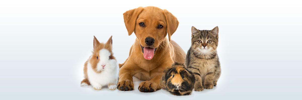 Leistungen in der Kleintierpraxis Trohorsch
