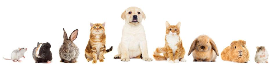 Tierarztpraxis für Kleintiere