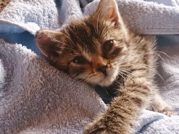 Kastration & Sterilisation bei Katzen