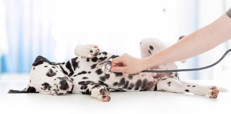 Vorsorge in der Tierarztpraxis Birgit Trohorsch